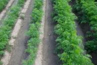 AgroArgentum® - belebter EG-Flüssigdünger