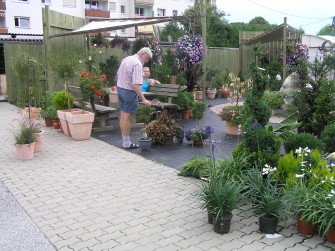 GRANDER®-Wasser und Mozart lassen Blumen besser blühen