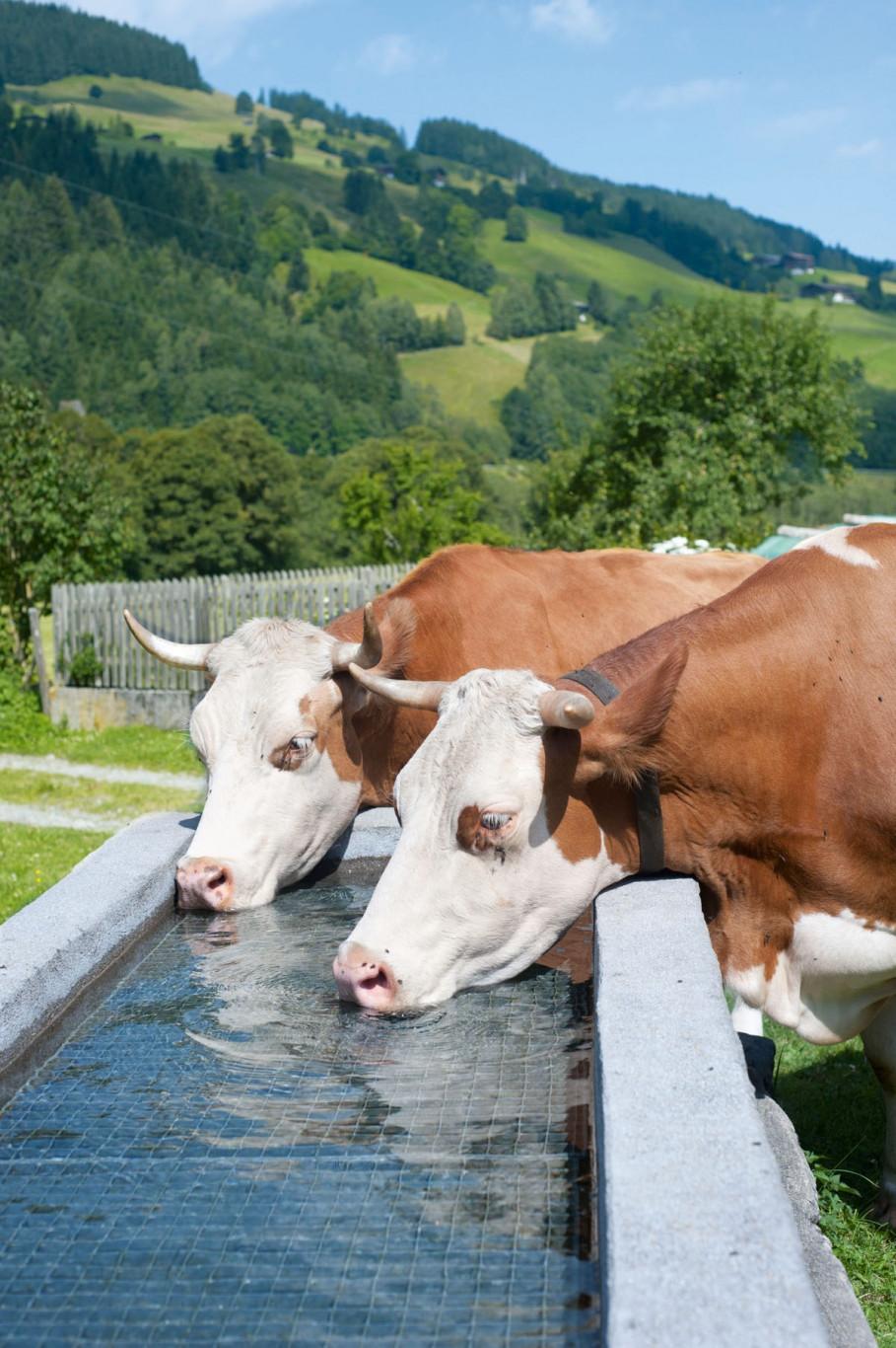 Vitalität & Wohlbefinden | Gewerbe / Industrie / Landwirtschaft